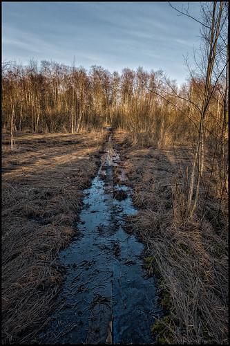 sky wet water clouds forest himmel swamp skog vatten hdr mosse moln duckboard spång vått duckboards