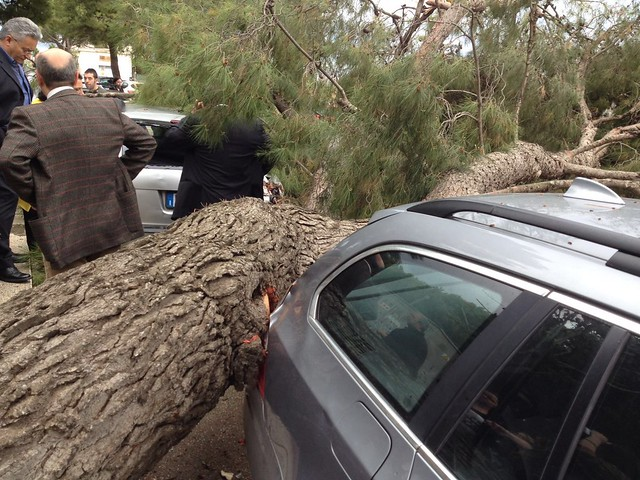albero caduto rutigliano 2