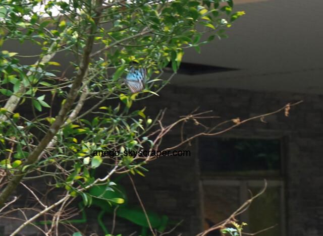 動物園 蝶