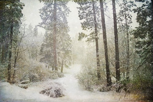 trees snow forest pines snowing shadowhousecreations kirstenfrank