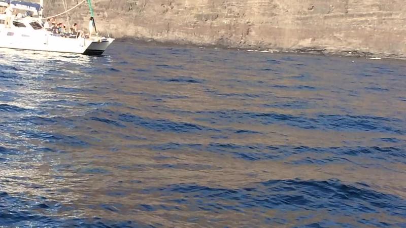 Los Gigantes Dolphins 2