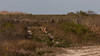 2016-02-06 - Anuhuac Wildlife Refuge-0176