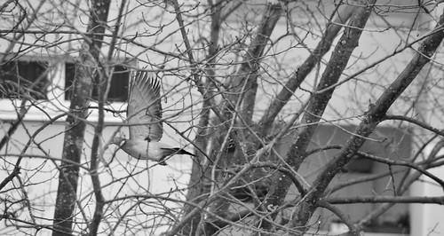 Stadtvogel