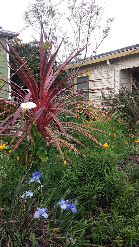 Front yard color riots