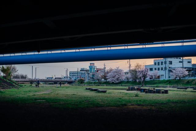 CherryBlossoms_412