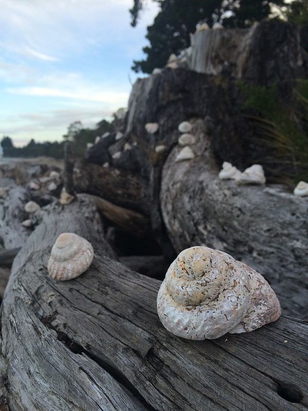 Golden Bay Shells