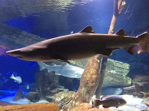 LI Aquarium- March 2016