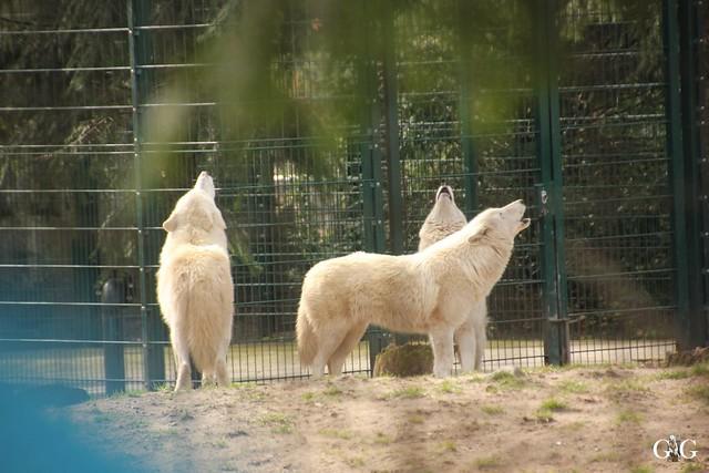 Frühlingstag im Zoo Berlin 03.04.201620