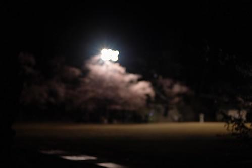 内野の夜桜 2016