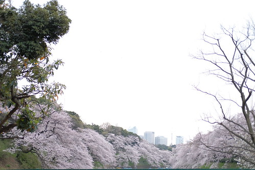 Hi-Key Sakura viewing at Chidorigafuchi moat 15