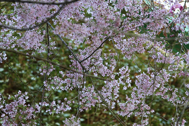small pink flowers on a tree