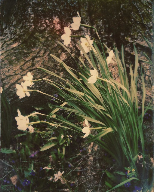 Flowers #flowers #spring #bloomingtonindiana