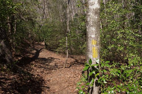 Palmetto Trail - Jocasee Gorges - 2