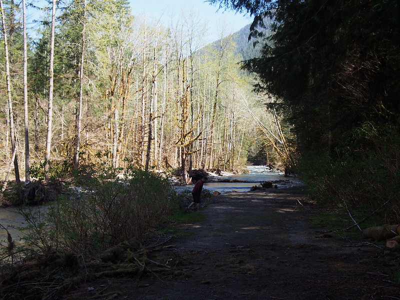 Index–Galena Road: Washout: The river completely destroyed the road here and took over its right of way!