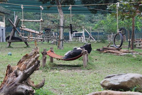 A bear lies on his back on a hammock