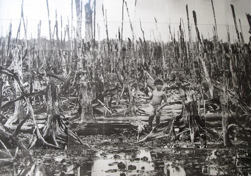 Ho Chi Minh Ville: forêt détruite suite au largage de produits toxiques