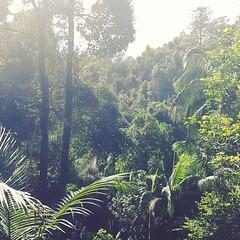 Enjoying a walk in the rainforest...