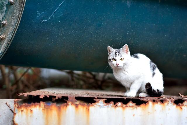 ネコの写真5