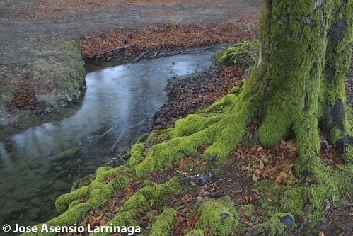 Parque Natural de Gorbeia  #DePaseoConLarri #Flickr -3046