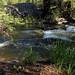 Colorado Creekside by zoniedude1