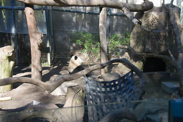 san diego zoo-17
