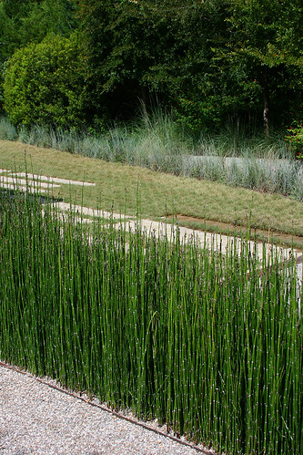 Linear horsetail