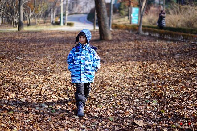 Autumn leaves walk