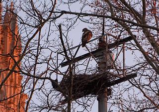 Grant's Tomb Hawk Nest - 6750
