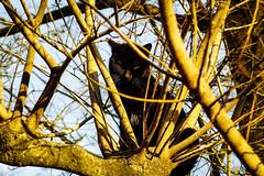 Today's Cat@2016-03-27