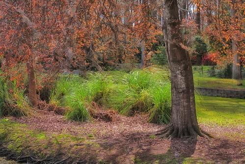gardens southcarolina orangeburg edistoriver edistogardens