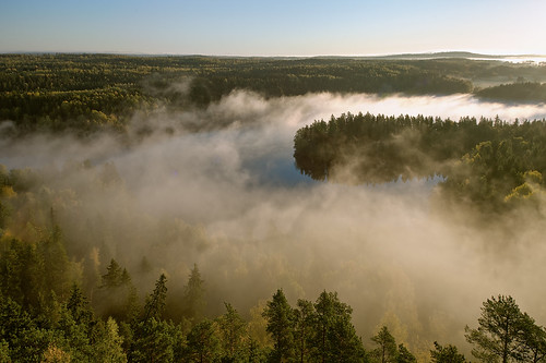 morning autumn mist lake tree fall nature weather misty fog forest sunrise finland season landscape countryside haze woods scenery colorful europe glow outdoor vibrant background hill foggy scenic peaceful aerialview calm fantasy silence mysterious cape mystical glowing magical idyllic hdr mystic