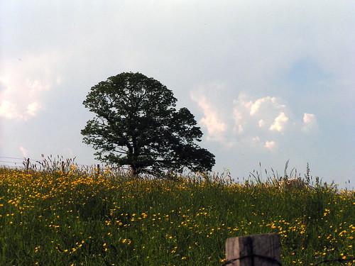 20080511 20915 0901 Jakobus Baum Wiese Wolken_01a