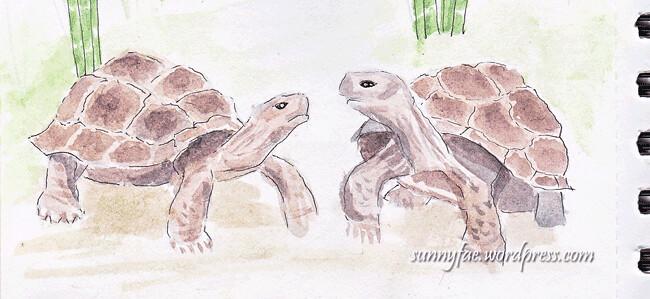 Tortoise Watercolour In My Sketch Book
