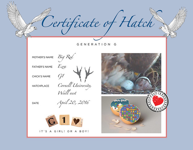 2016 Hatch Certificate-G1