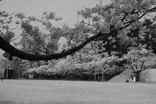 sakura monochrome 7