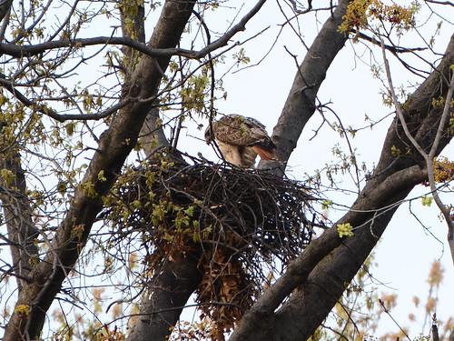 Riverside Nest - 7486