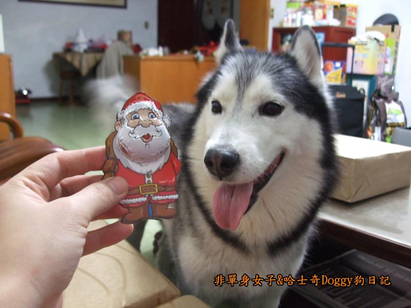 Doggy聖誕節紅色聖誕樹髮箍裝扮06