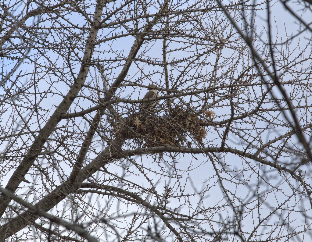 Christo perched above his nest in TSP