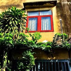 #window #bangkok