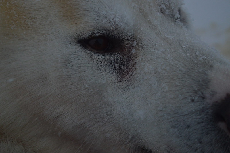 03/02 Huskysledetocht