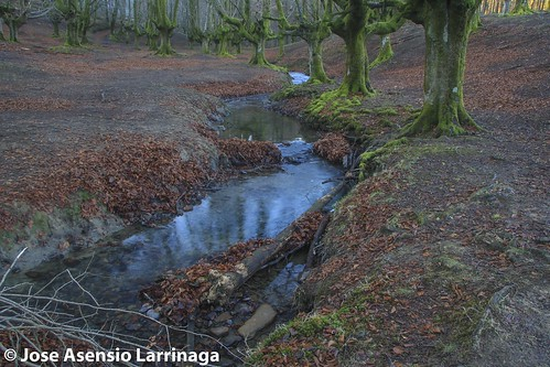 Parque Natural de Gorbeia  #DePaseoConLarri #Flickr -3073