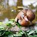 Guyana Zoo Jan 2016 #28
