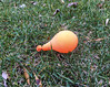 balloon on grass-002