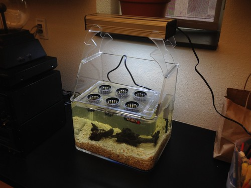 Making Across the Curriculum - Aquaponics Project Test Tank
