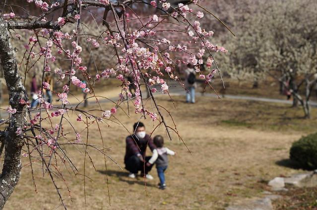Hirashiba-Park_01