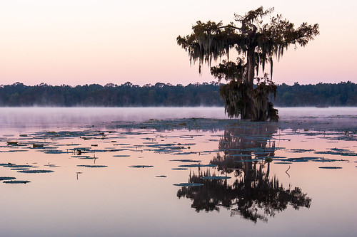 trees usa lake sunrise dawn louisiana atchafalayabasin delta swamp wetlands cypress lakemartin