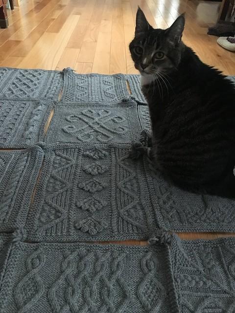 Santana has already claimed the blanket.