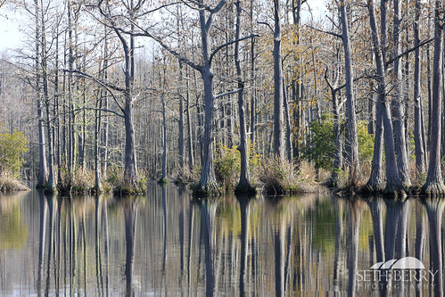 statepark trees lake reflection sc pond camden southcarolina adventure kayaking paddling goodale goodalestatepark sethberryphotography