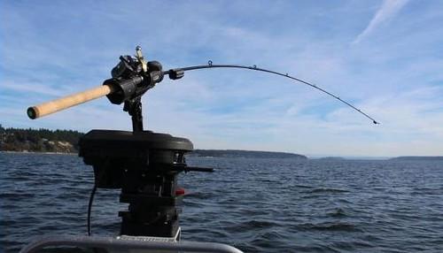 Вудка Fish Sentry Rods
