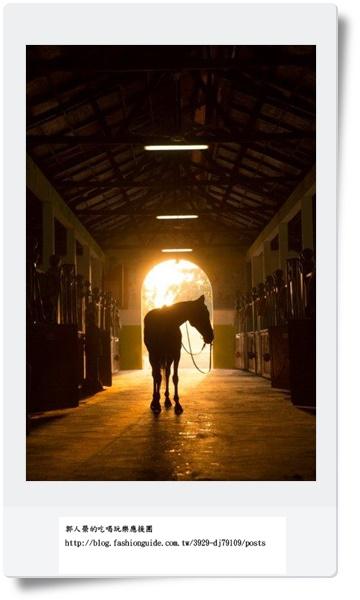 Horse Sunrise